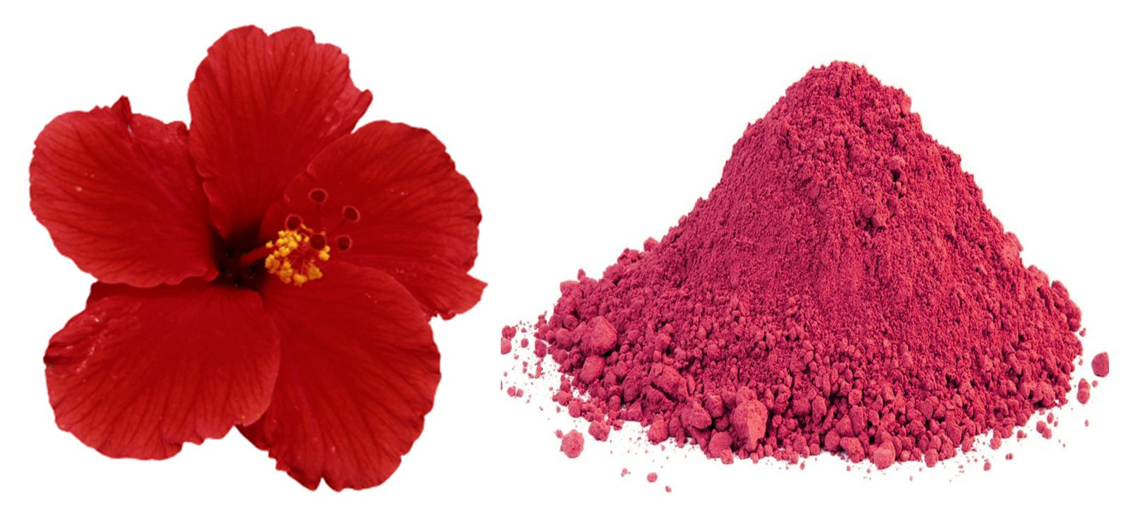Hibiscus Powder Daulos Organic Products